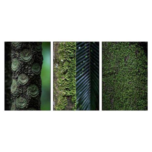 Foto-Marcelo-Auge-Trio-Verde-Oscar1